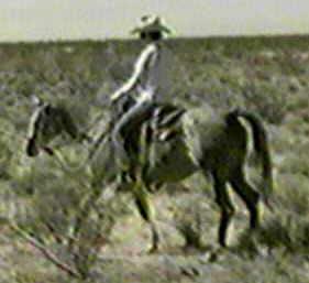 http://www.sdarabians.com/Images/DumaHack4v.jpg (9339 bytes)